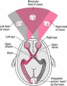 Otak kanan -Kiri dan Pencahayaan