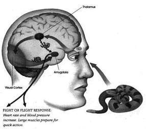 Otak Fisiologi